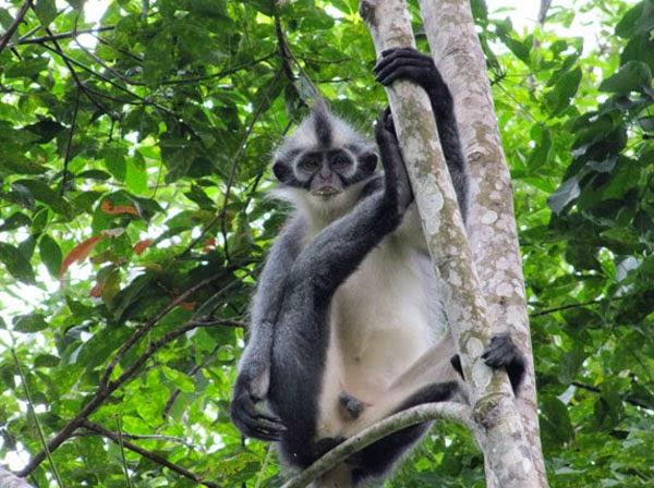 Kedih-Sumatera